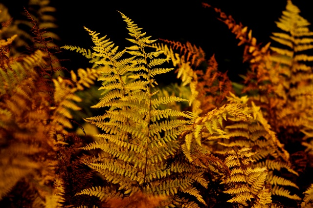 Colorful ferns in Vermont