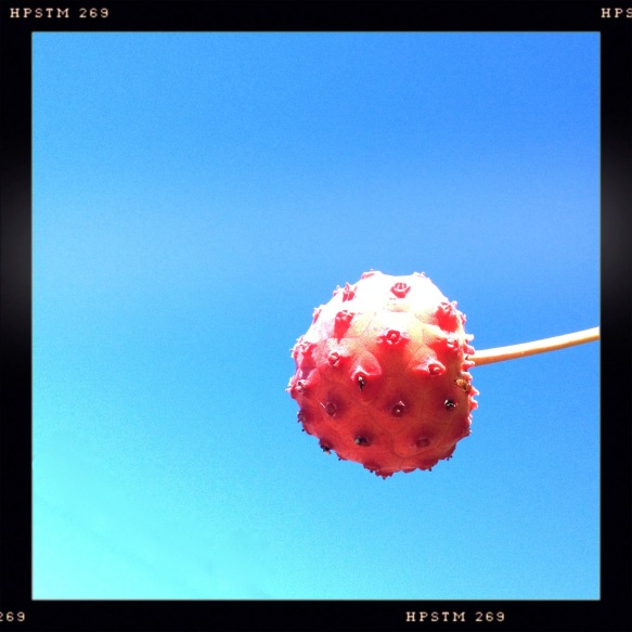 Red Fruit against Blue Sky