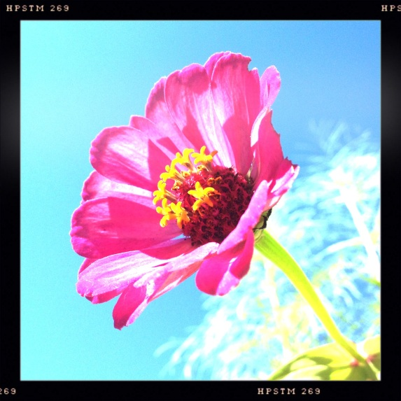 Red flower against blue sky