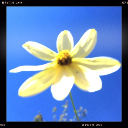 Yellow Flower against Blue Sky
