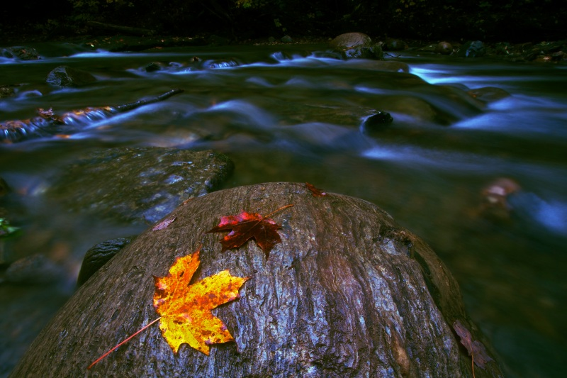 Leaves on Rock in Vermont Creek