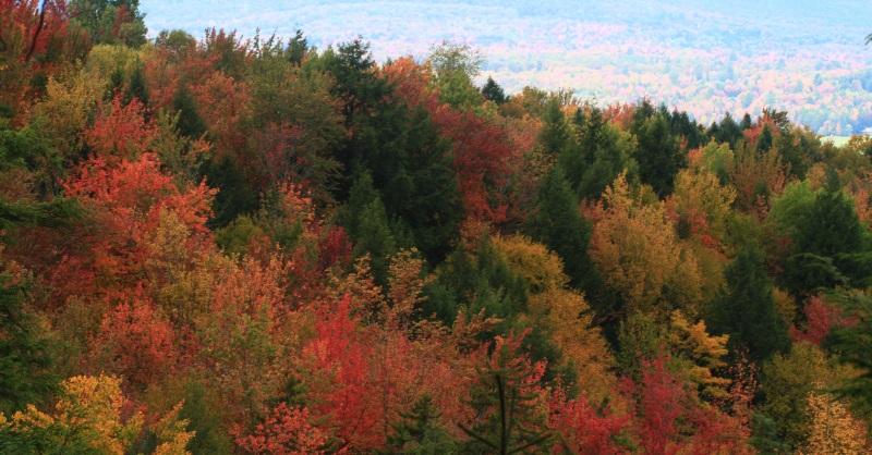 Vermont Foliage Panorama
