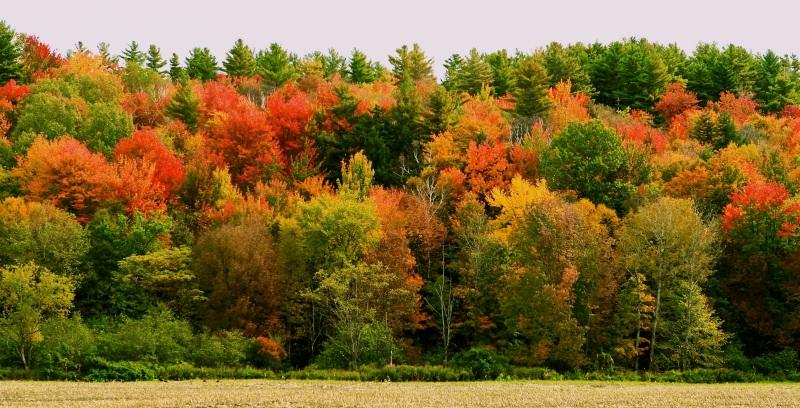Foliage Panorama