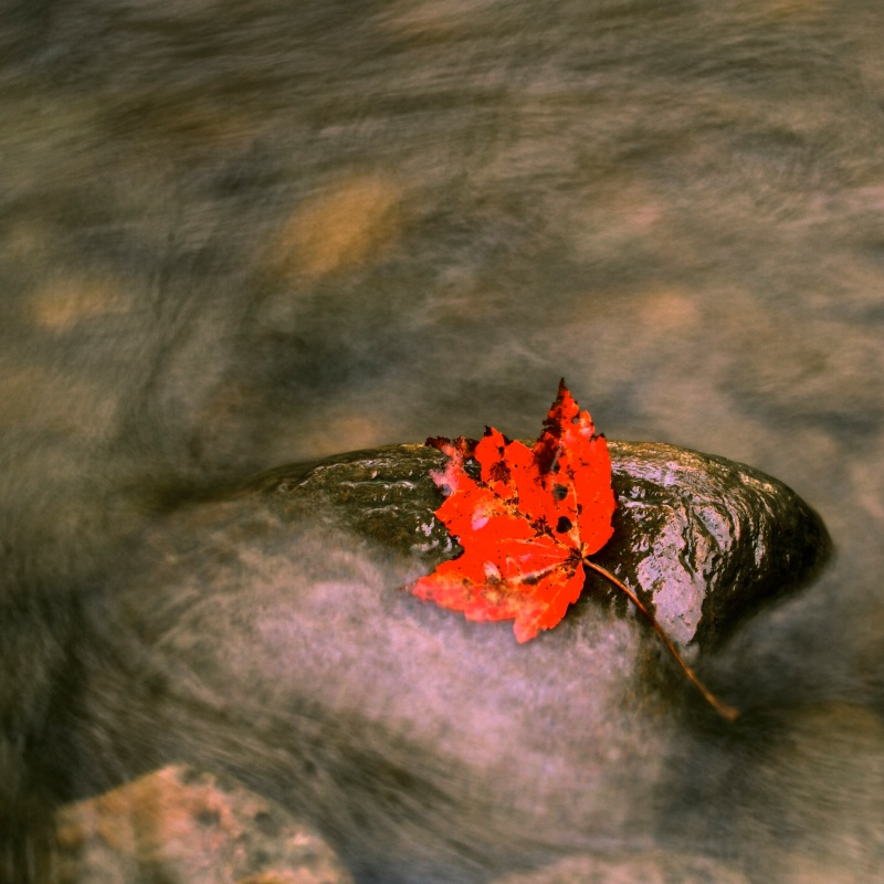 Leaf on Rock in Creek