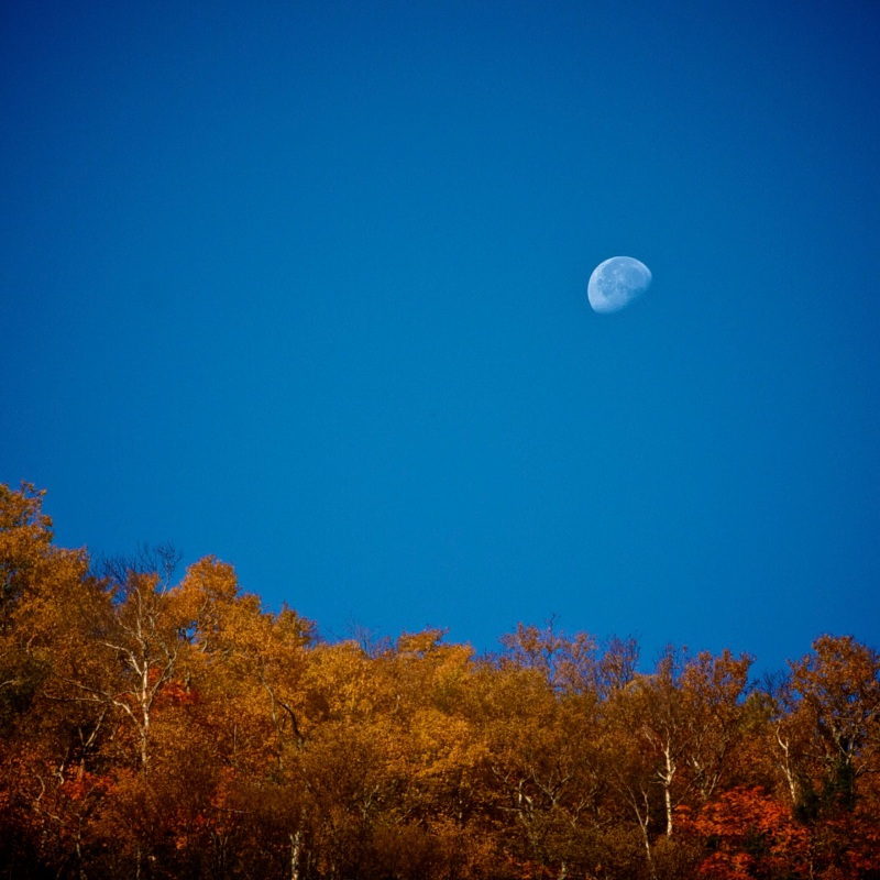 Moonset over Fall Foliage