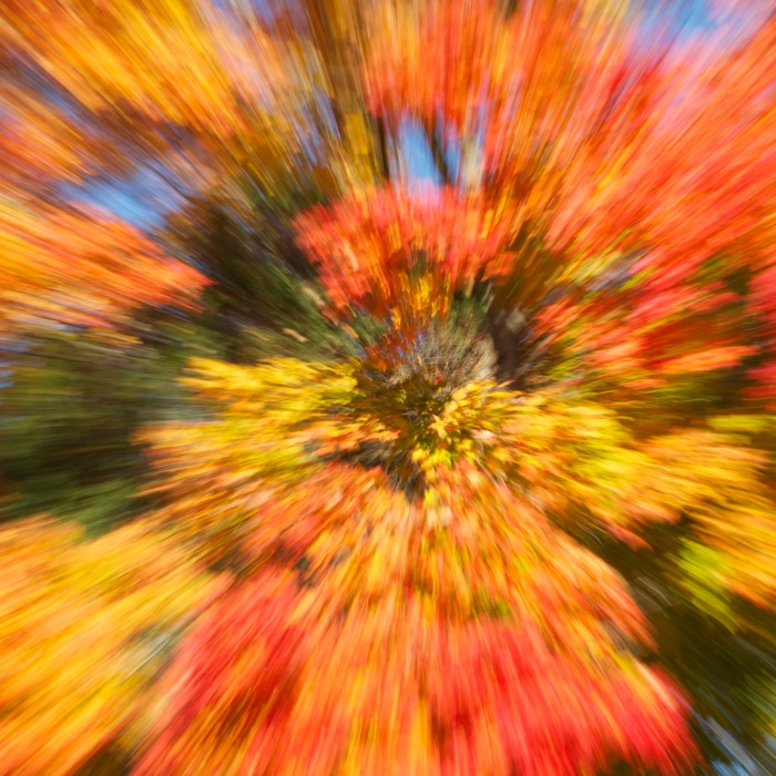 Burst of Fall Colors