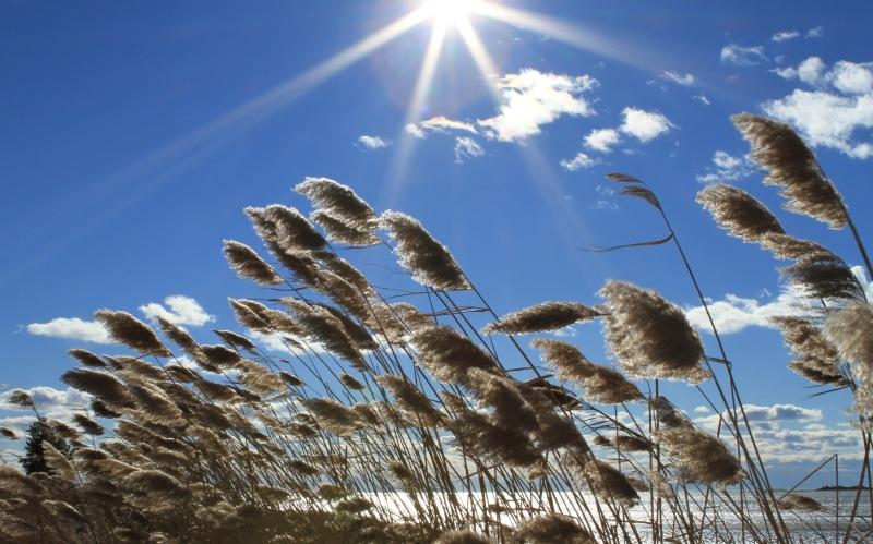 Sun over beach reeds