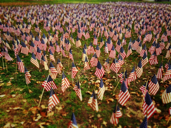 US flags covering a lawn in Branford, CT