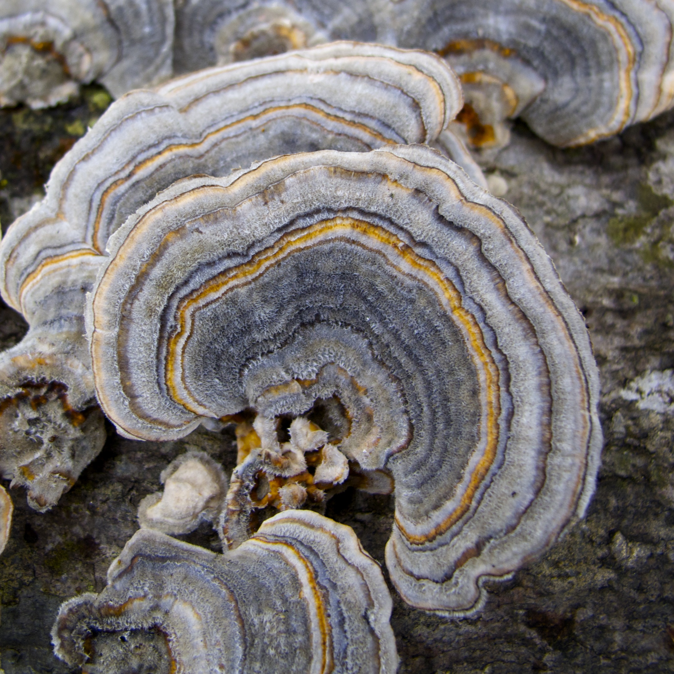 Fungi on tree trunk