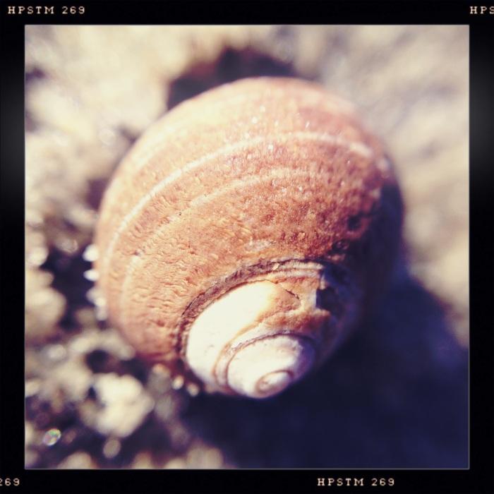 Beach Shell 2