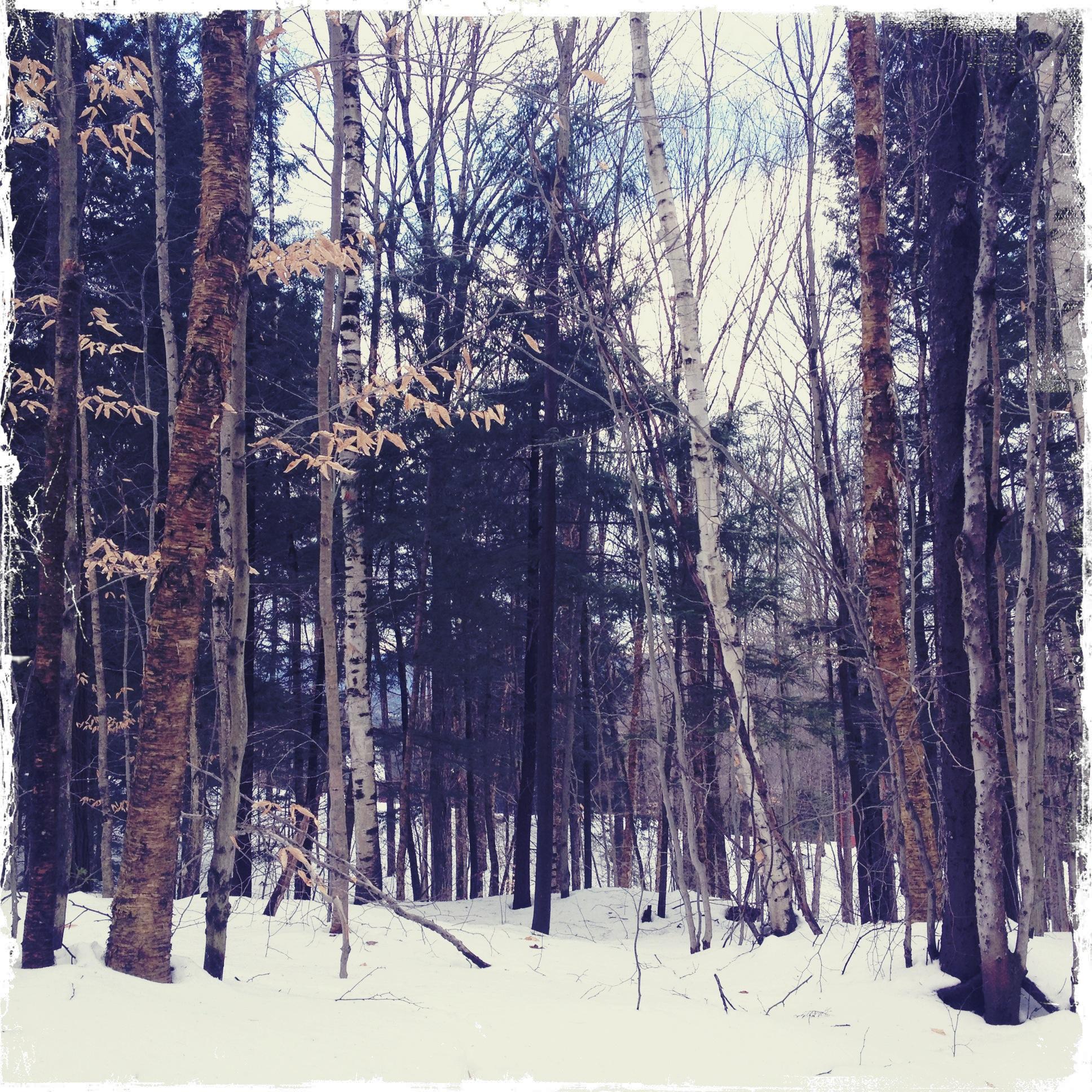 Vermont Winter Forest