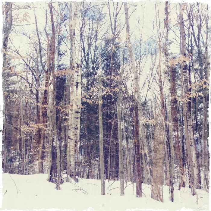 Vermont Forest Double Exposure