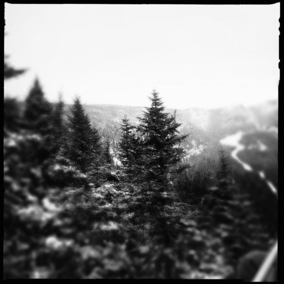 Snowy Trees and Slopes