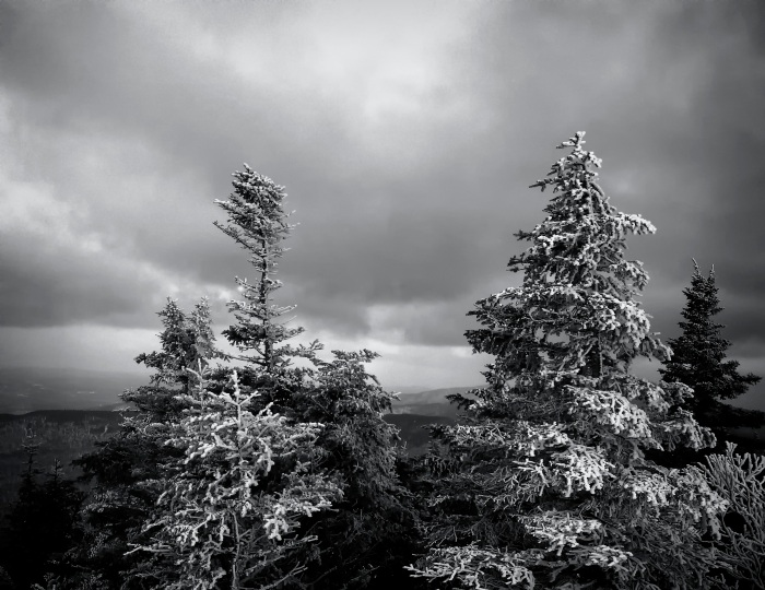 Snow-covered Trees in Vermont
