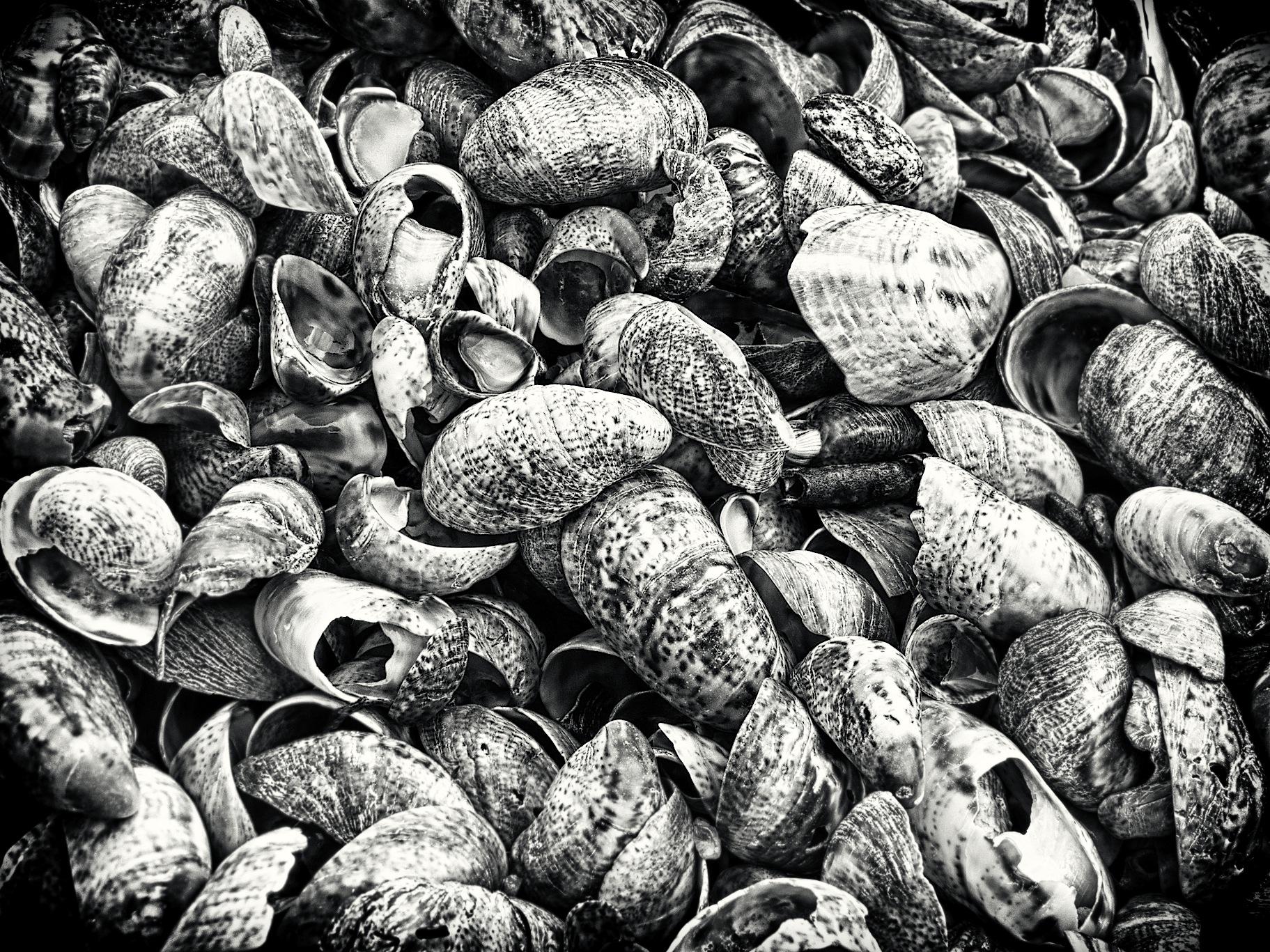 Hammonasset Beach Shells