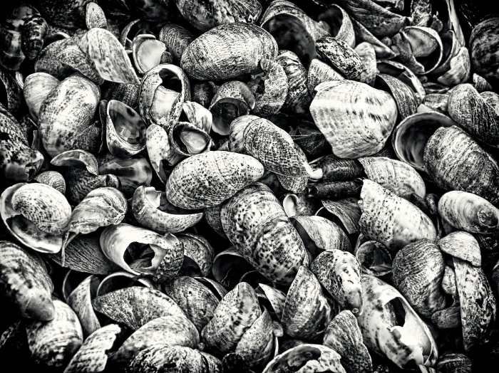 Hammonasset Beach Shells