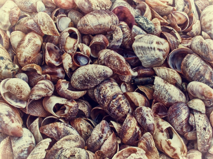Hammonasset Beach Shells in Color