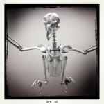 Bird Skeleton, Natural HistoryMuseum