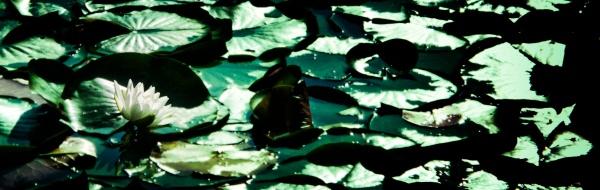 Water Lilies Blue Green