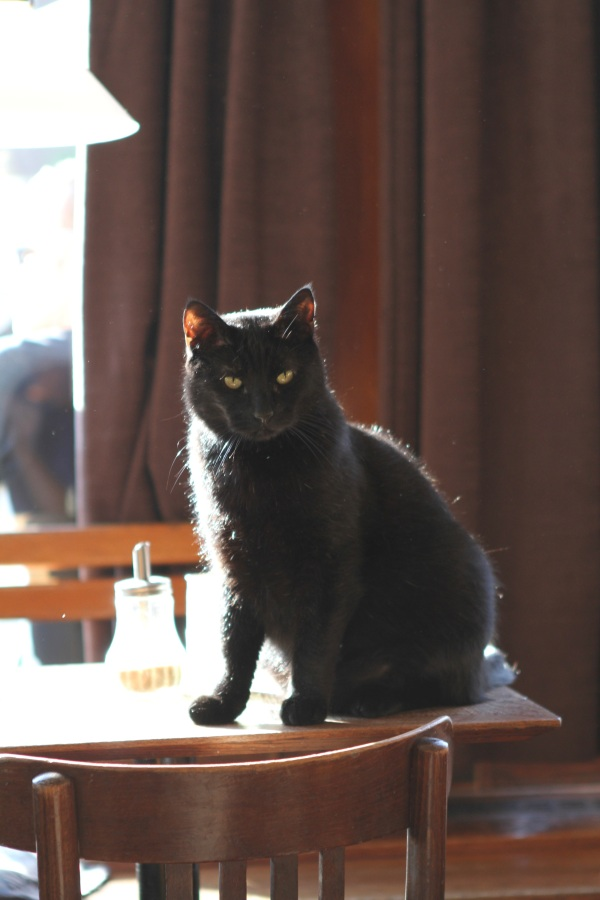 Black Cat in a Bar