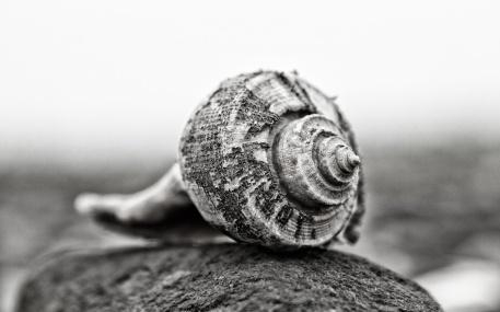 Shell in the Spotlight