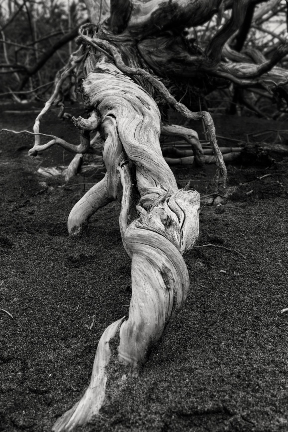 Gnarly Tree Trunk