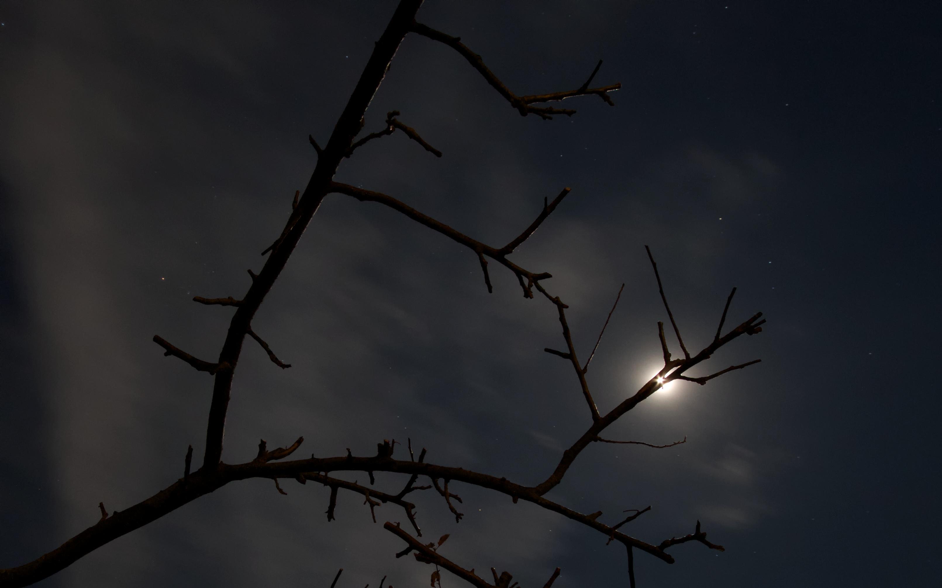 Midnight Moon 1