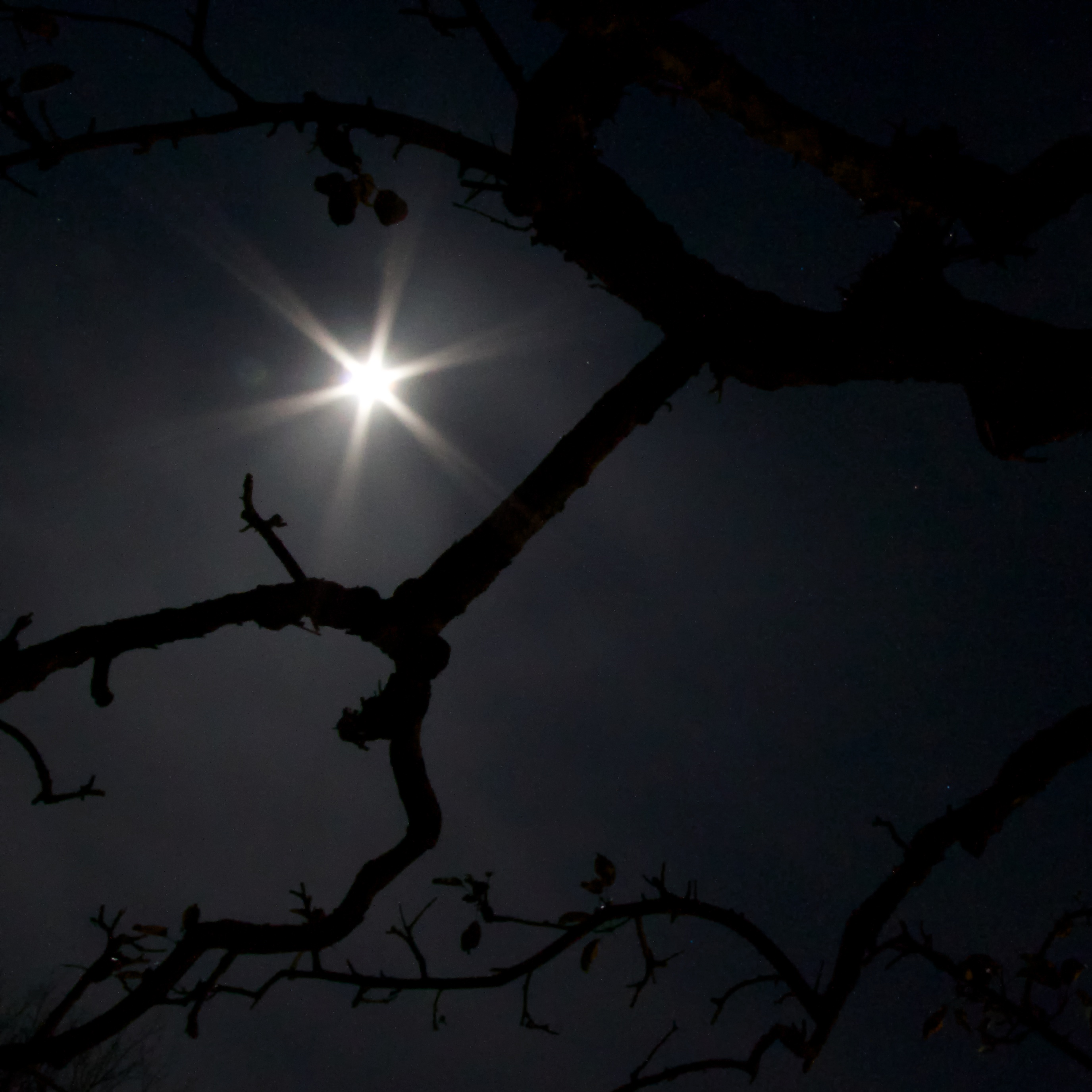 Midnight Moon 2