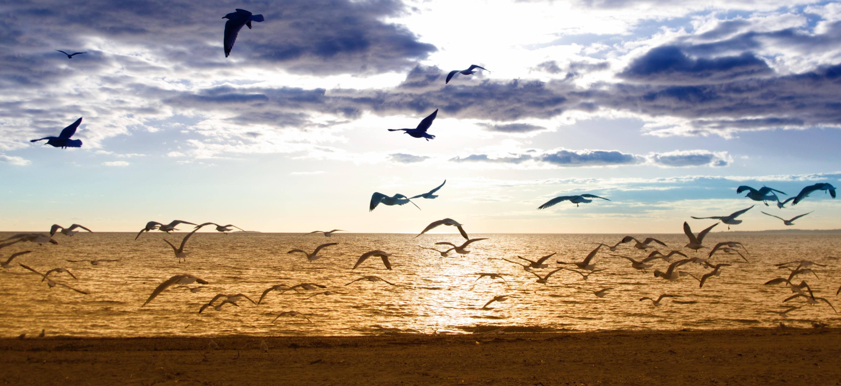 Birds taking off on beach