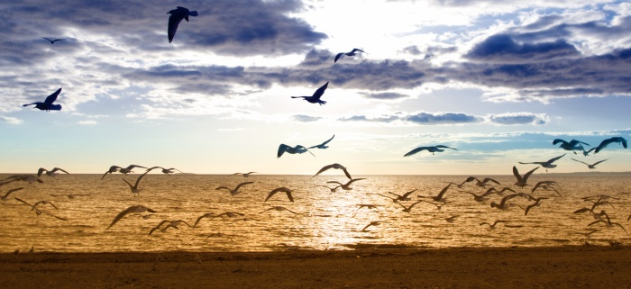 Birds taking off on beach