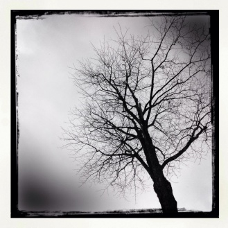 Winter Tree 4