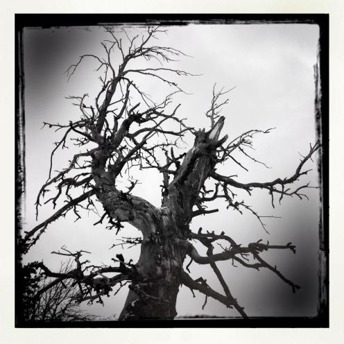 Winter Tree 5