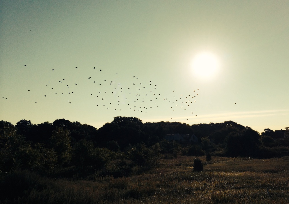 Flock of birds at sunrise