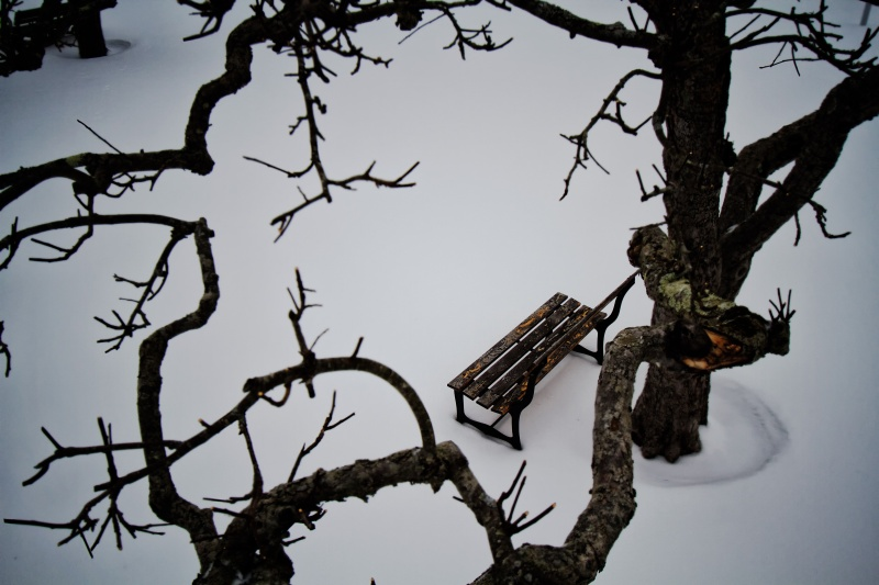 Bench under apple tree in the snow