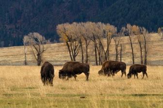 Montana201510-294