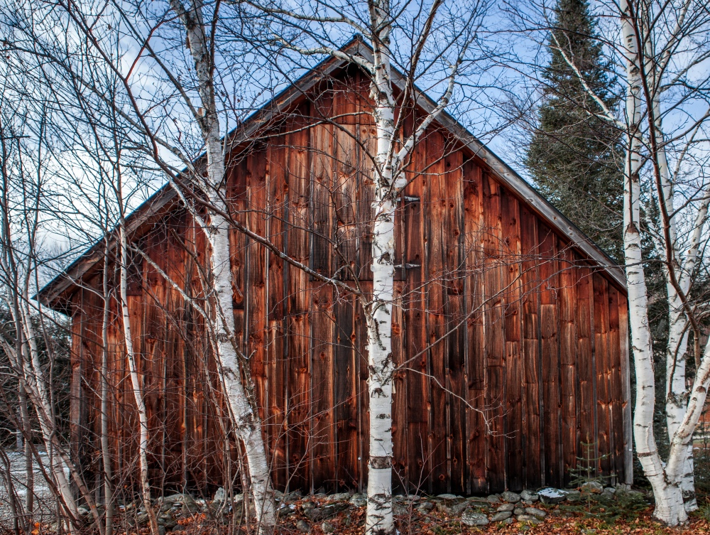 Red barn with white birch trees