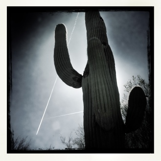 Black and white cactus
