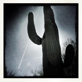 Black and white cactus