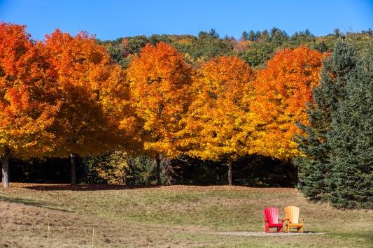 Vermont foliage 3