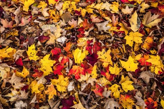 Vermont foliage 2