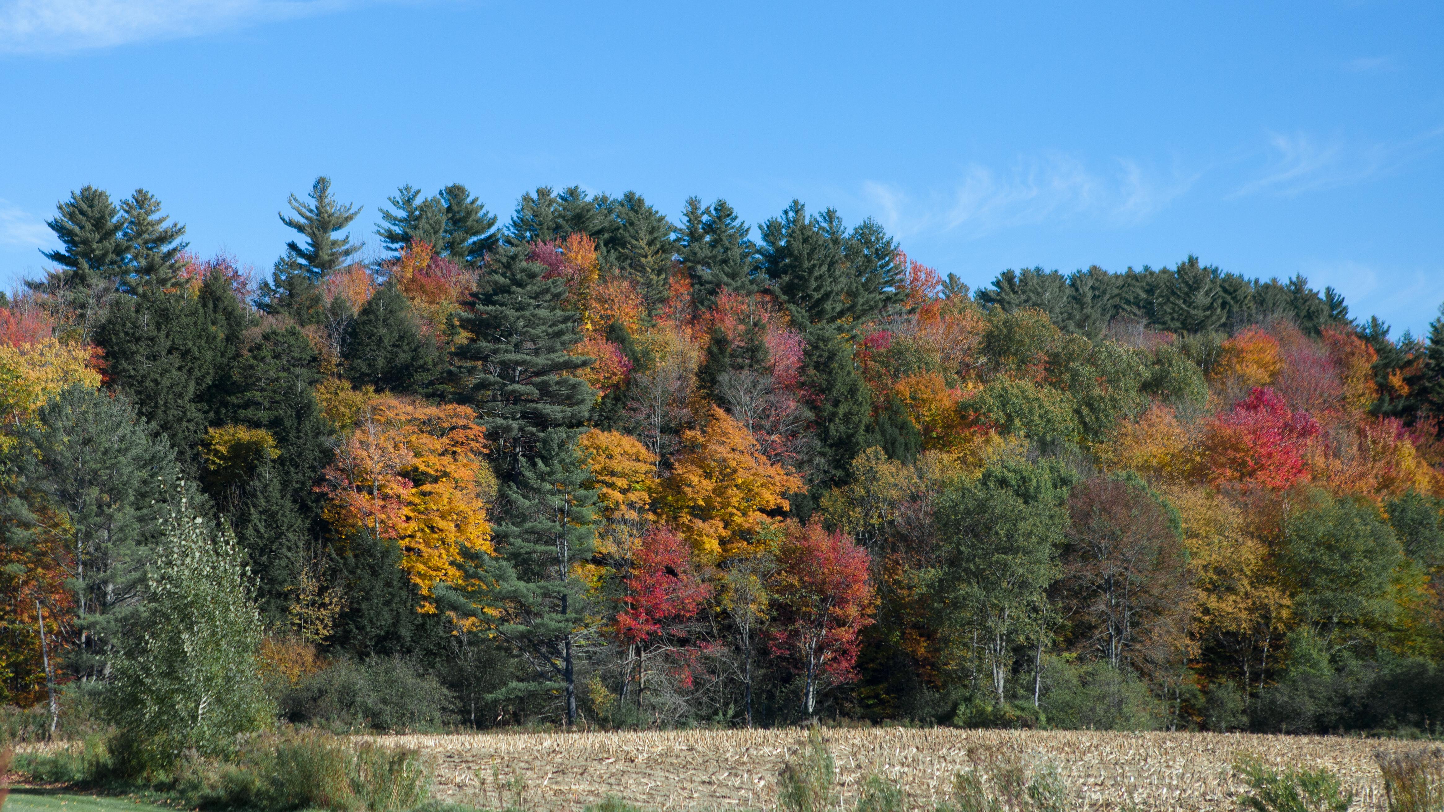 Vermont foliage 1