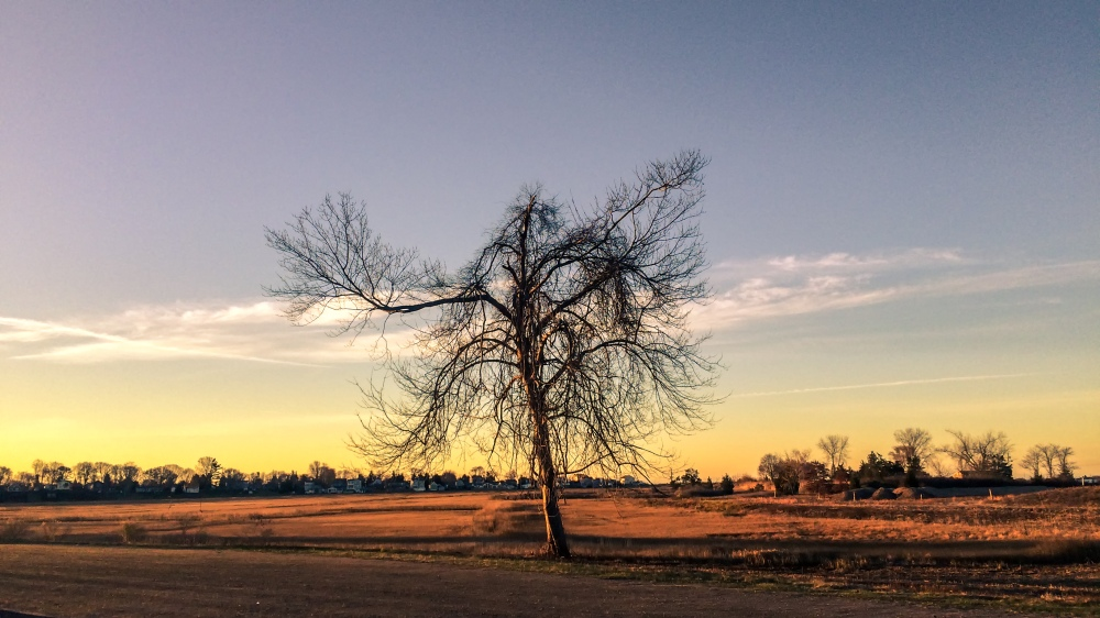 tree with no leaves at sunrise