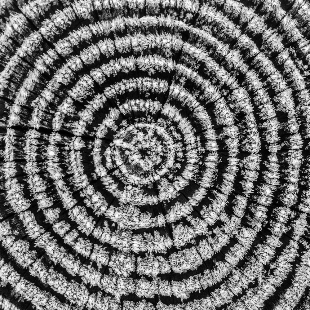 tree rings in black and white