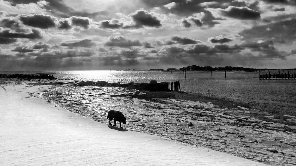Dog walking on snowy beach