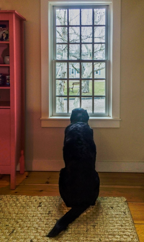 dog at window looking outside
