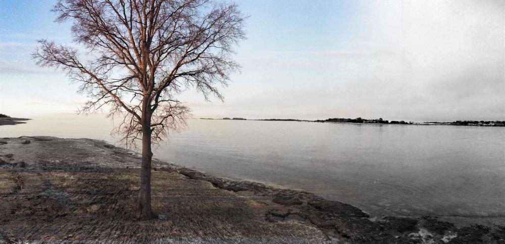 single tree on beach