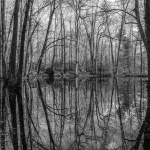 trees reflected in still pond surface