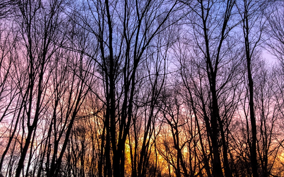 purple sky seen through bare trees