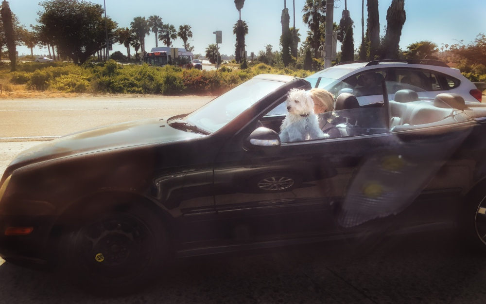blonde woman with dog in convertible